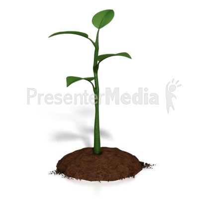 Small Plant Growth Presentation clipart