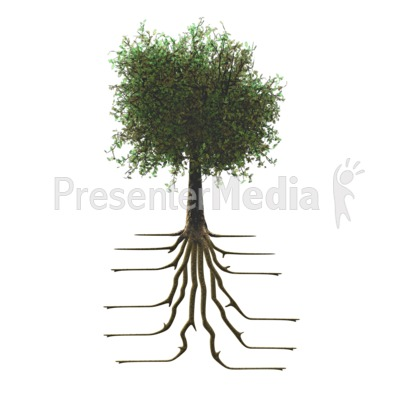 Tree With Roots Presentation clipart