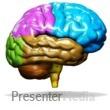 Brain Custom Color Presentation Clipart