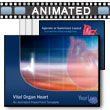 ID# 4090 Vital Organ Heart PowerPoint Template