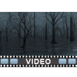 Dead Swamp Video Background