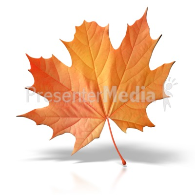 Autumn Leaf Presentation clipart