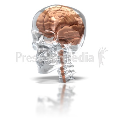 Brain in Glass Skull Presentation clipart