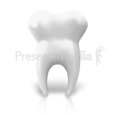 Single Tooth Upright Presentation clipart