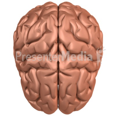 Brain Top View Presentation clipart