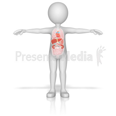 Figure with Organs Presentation clipart