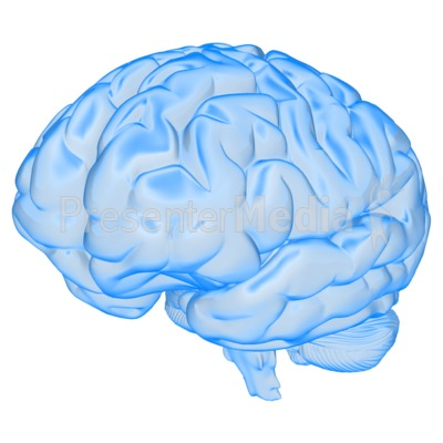 Brain Semi Transparent Presentation clipart
