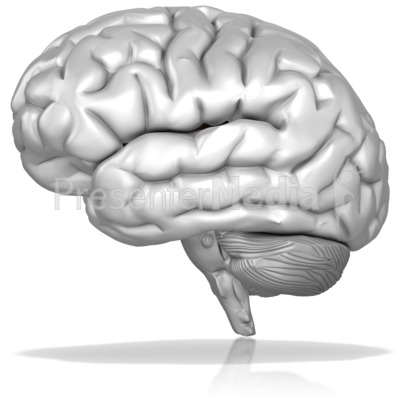 Black And White Brain Presentation clipart