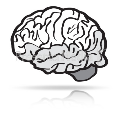 Brain Line Sketch Presentation clipart