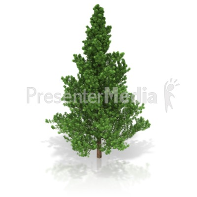 Pine Tree Presentation clipart