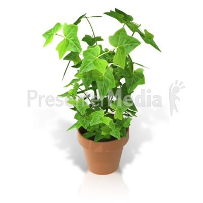 Plant in a Pot Presentation clipart