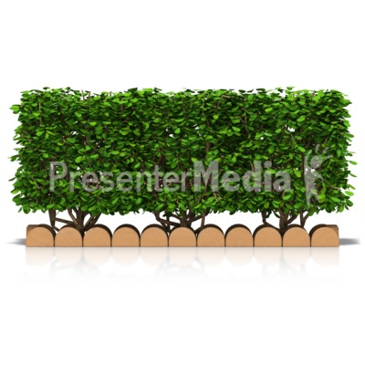 Hedge Front View Presentation clipart