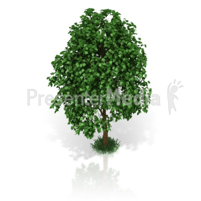 Small Tree Presentation clipart