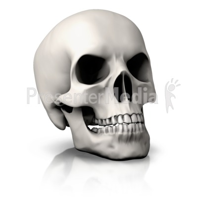 Simple Skull Angled Presentation clipart